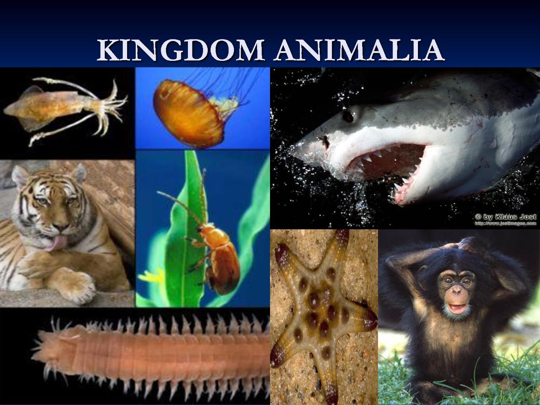 examples of vertebrates